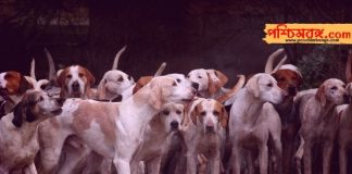 dog kills, food poison, dog, dog die