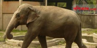 Elephant Alipore Zoo, Alipore Zoo Opening after covid 19
